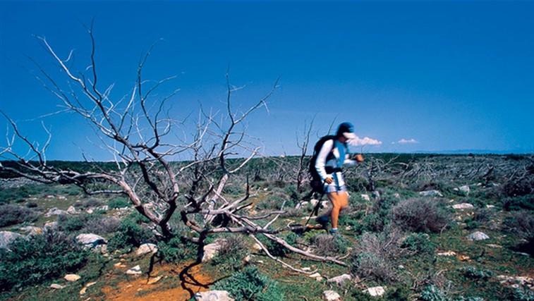 Pri Osorju je teren zelo prehoden in lahko hodiš, kjerkoli hočeš. Kakšna razlika v primerjavi s severnim delom otoka, kjer so bile zaradi poraščenosti poti edina možnost za pešačenje! (foto: Urban Golob)