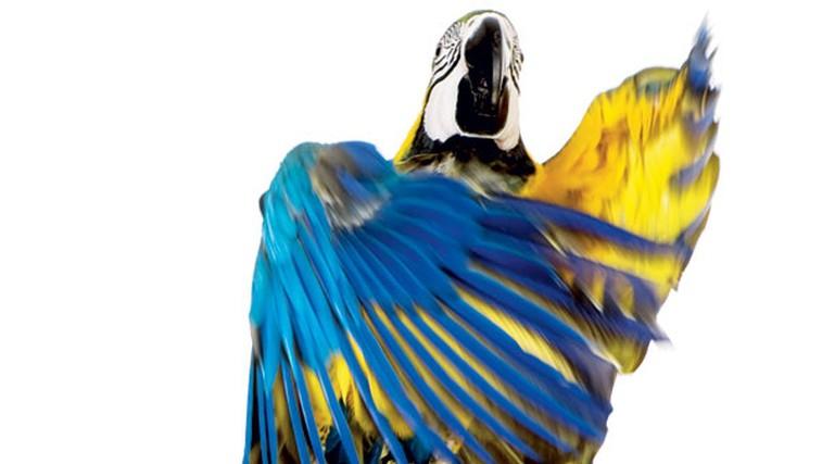 Živali so med nami (foto: Shutterstock.com)