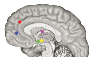Možgani na počitnicah