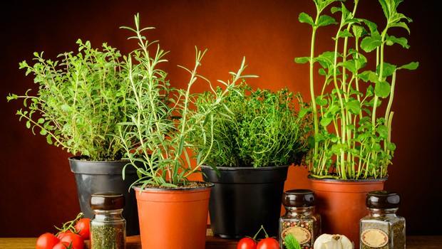 Zemlja naj bo zrahljana, da bodo tudi korenine dobile kisik in omogočile rast mladih rastlin. (foto: Profimedia)