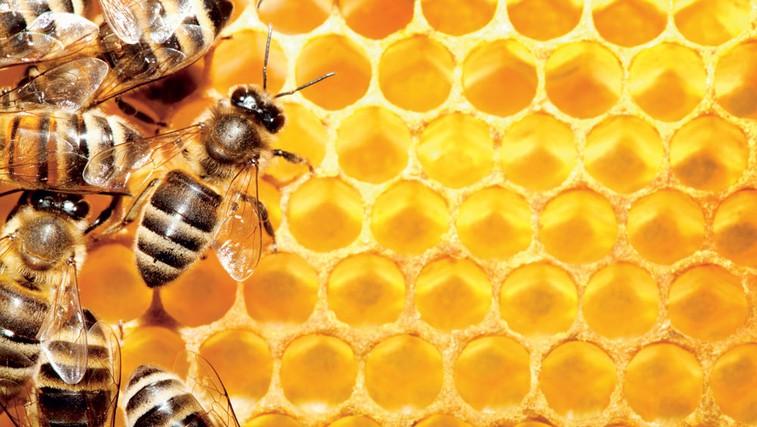 Zdravljenje multiple skleroze s čebeljim pikom. (foto: Shutterstock)