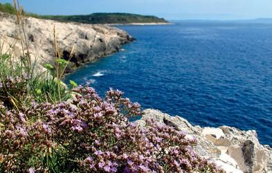 Susak - sredozemski posebnež