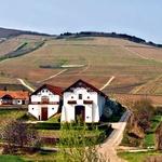 Tokaj, slovito vino z zaščiteno označbo porekla, pridelujejo v okolici mesta Tokaj, ki je pod zaščito UNESCA.  (foto: Arhiv Burdy in Profimedia.cz)