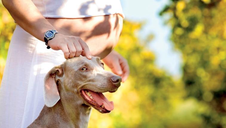 Nosečnice, ki imajo psa, so bolj aktivne... (foto: Shutterstock.com)