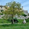Vrt je v javni rabi in je del Fabianijeve poti.