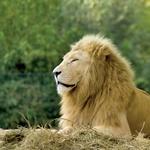 Najboljši živalski vrtovi v Evropi (foto: Shutterstock.com)