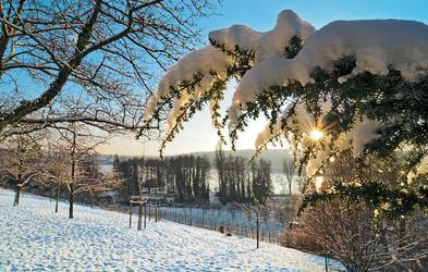Zimska pravljica na očarljivem otoku Mainau