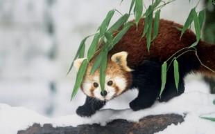 Foto utrinki: Zima v ljubljanskem živalskem vrtu