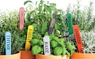 Zelišča za zdravo kuhinjo
