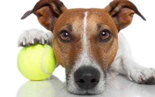 Zdravljenje bolečin v hrbtu z žogico za tenis
