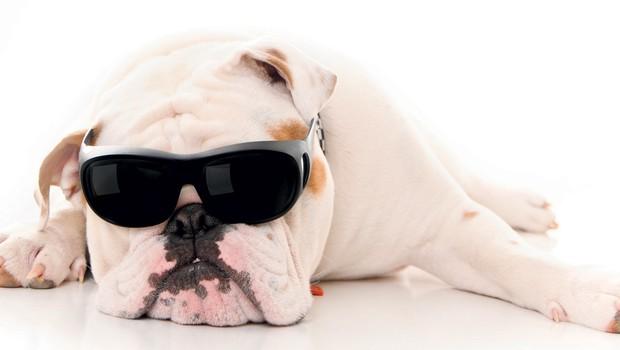 Kolumna: Sladko brezdelje (foto: Shutterstock.com)