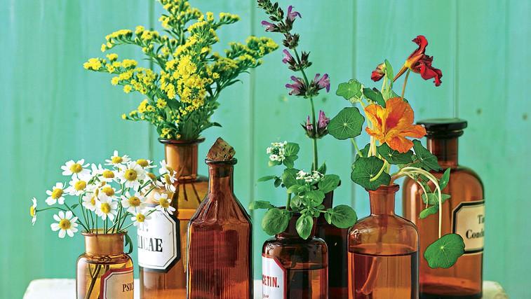 Moč rastlin namesto antibiotikov (foto: fotolia, profimedia)