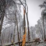 Izogibajte se aktivnostim v bližini dreves (foto: Aleš Pavletič)