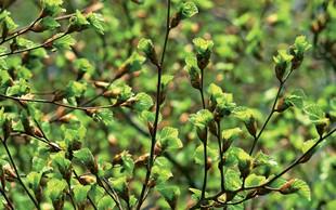 Zdravilna moč rastlinskih poganjkov