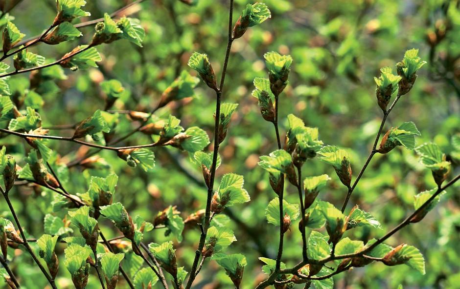 Zdravilna moč rastlinskih poganjkov (foto: revija Moj lepi vrt)