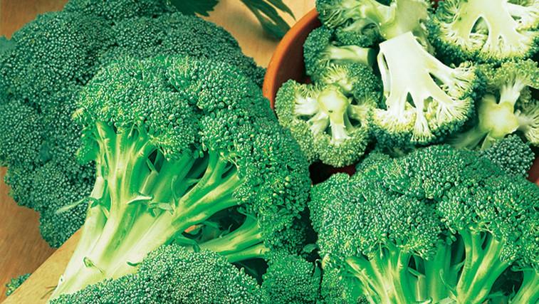 Brokoli – zeleno bogastvo vitaminov in mineralov na naših mizah (foto: Flora Press/M. Hughes-Jones, Fotolia/Nimbus, GAP/GAP Photos, Magic Garden Seeds, Bruno Nebelung GmbH/Kiepenkerl, Gärtner Pötschke, Shutterstock/R.Griffin/MC_PP/T)