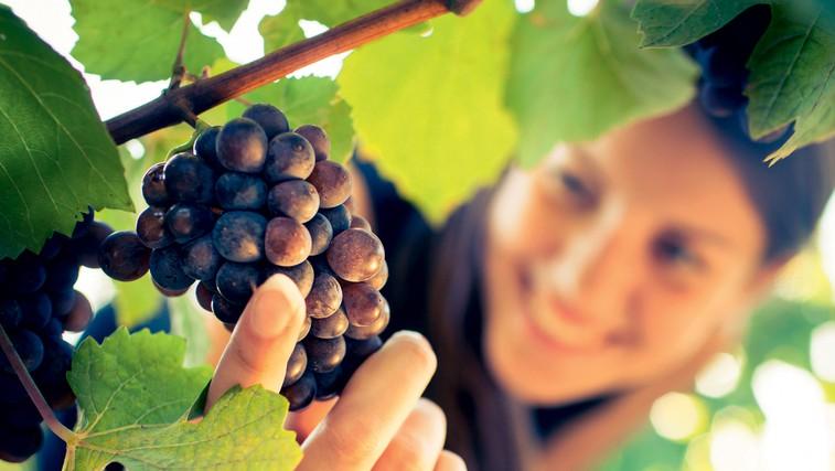 Grozdje - čudežno sadje, ki čisti in neguje (foto: Revija Lisa)