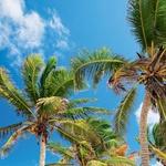 Naj duša sanja na plaži. (foto: fotolia)
