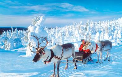 Safari z vpreženimi jelenčki na Finskem