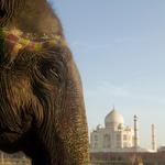 Taj Mahal - simbol večne ljubezni (foto: Profimedia)