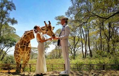 Foto: Par, ki se je poročil na vseh koncih sveta