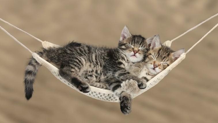 Dovolj spanja zagotovi dolgo življenje (foto: Profimedia)