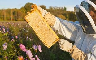 Čebele potrebujejo našo zaščito, saj je brez njih v nevarnosti naše zdravje