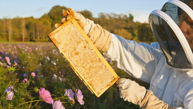 Čebele potrebujejo našo zaščito, saj je brez njih v nevarnosti naše zdravje (foto: profimedia)