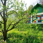 V vrtu, na dvorišču ali pa na balkonu: s cvetlicami in zelišči boste zelo enostavno poskrbeli za čebele. (foto: profimedia)
