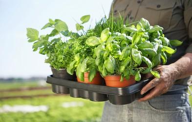 Zelišča, ki blagodejno in zdravilno vplivajo na naše telo