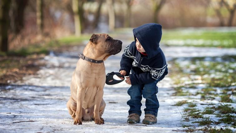 Kako zdravijo živali (foto: Shutterstock.com)