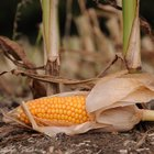 Katere rastline so povzročiteljice alergij? (foto: Profimedia)