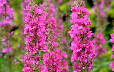 7 zdravilnih rastlin, na katere to poletje ne smemo pozabiti