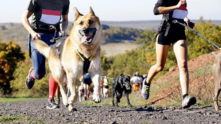 Canicross: Kako se pravilno lotiti teka s psom? (foto: Shutterstock.com)