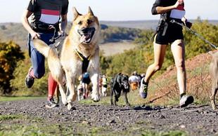 Canicross: Kako se pravilno lotiti teka s psom?