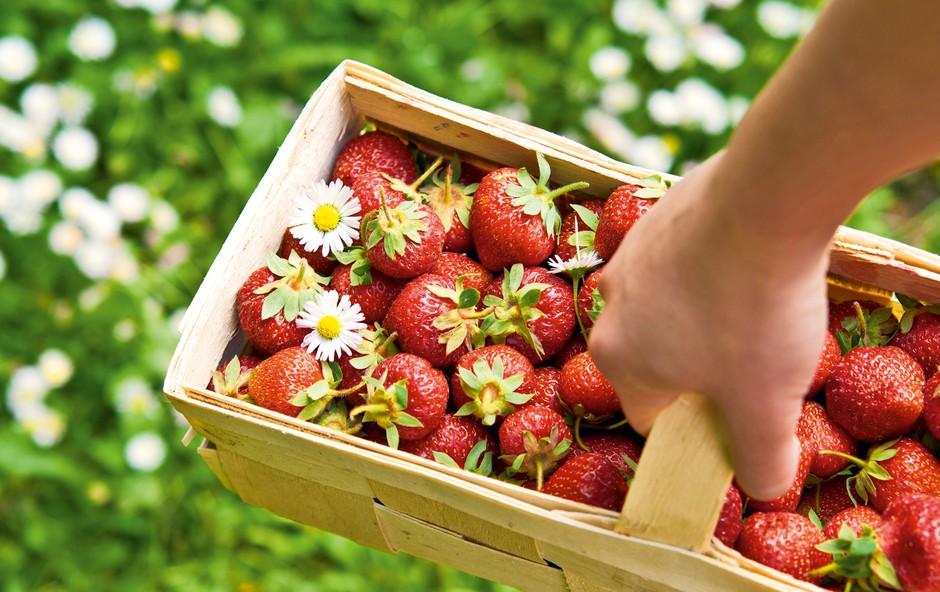 Nova jagodna dieta: S sladkanjem do vitkosti! (foto: Shutterstock)