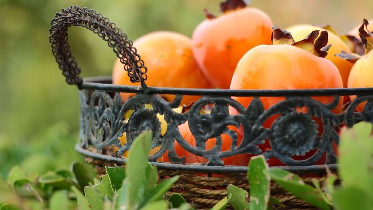 Hranilne in zdravilne lastnosti kakija (foto: Profimedia)