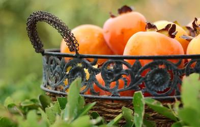 Hranilne in zdravilne lastnosti kakija