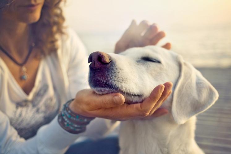 USTANOVITEV MINISTRSTVA Znanstveniki pravijo, da srečni ljudje vedo, kaj jim daje energijo. V sebi imajo neke vrste 'ministrstvo za srečo …