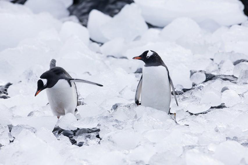 VIDEO: 360° Antarktike - pot skozi led