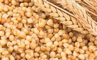 Za kaj je koristna kuhana pšenica?