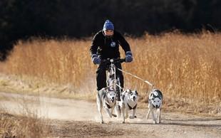 Matjaž Ovsenek: V marsičem je treniranje vlečnih psov podobno treniranju tekačev na dolge proge
