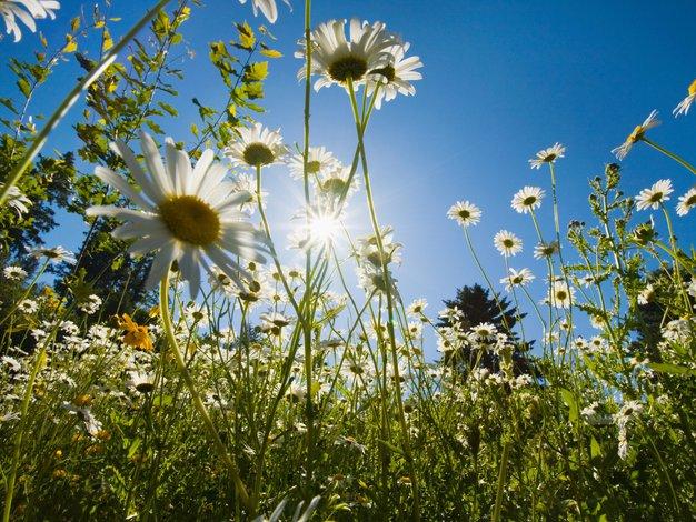 Previdno tudi na pomladnem soncu - Foto: Shutterstock.com, Profimedia