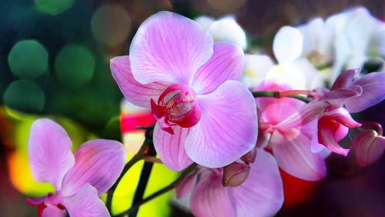 Kako negovati sobne rastline (foto: Profimedia)