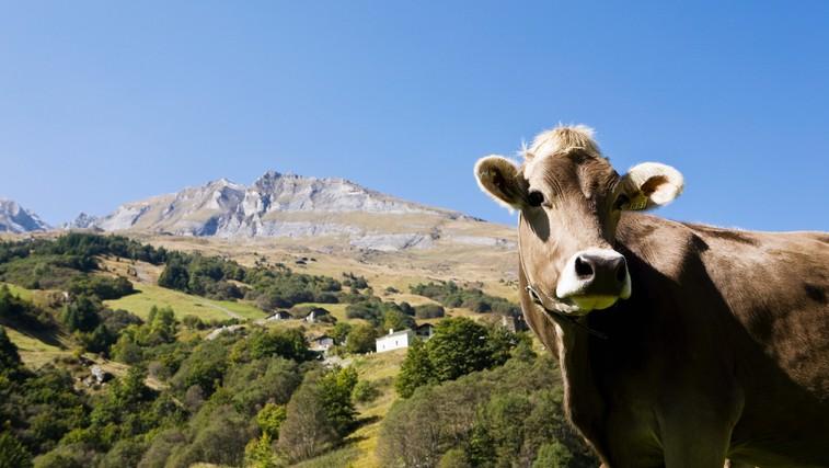 6 živil v katerih se skriva živalska maščoba (foto: Profimedia)