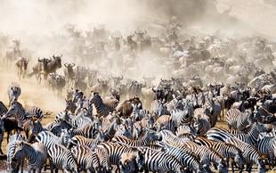 Sprehod po najboljših živalskih narodnih parkih