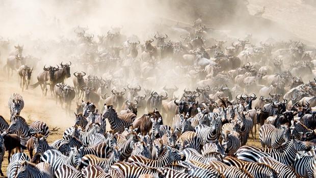 Sprehod po najboljših živalskih narodnih parkih (foto: Shutterstock)