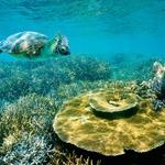 7 najlepših koralnih grebenov (foto: Shutterstock)