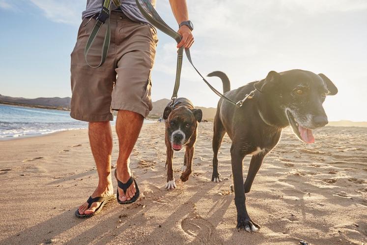 Sprehodite psa Čeprav je misel, da boste preostanek dneva preživeli na kavču, saj vas mučijo krči od včerajšnje vadbe, precej …