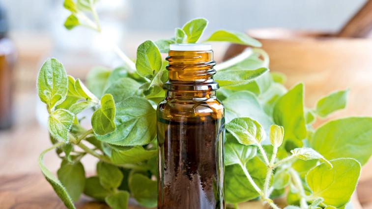 Aromatični origano –  začimba, ki zdravi (foto: Shutterstock)